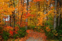 Scenic Autumn Walk Way Royalty Free Stock Image