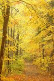 Scenic autumnal forest path Stock Photos