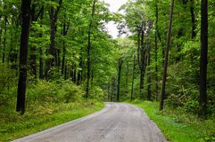 Scenic backroad in a Pennsylvania forest. A scenic dirt road running through a forest in northeastern Pennsylvania. The woods contain oaks, maples, beech and stock photos