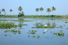 Scenic backwater destinations of Kerala, India. Royalty Free Stock Photos