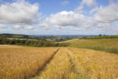 Scenic barley field Royalty Free Stock Photo