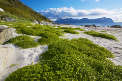 Scenic beach on Lofoten Royalty Free Stock Image