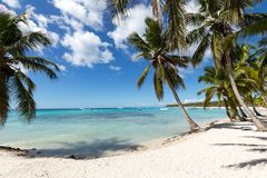 Scenic Beach With Palm Tree and white sand.  Stock Photo