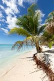 Scenic Beach With Palm Tree and white sand.  Stock Image