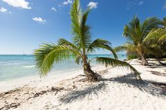 Scenic Beach With Palm Tree and white sand.  Stock Photography