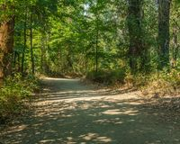 Scenic and beautiful hiking gravel road or trail in the forest. royalty free stock photography