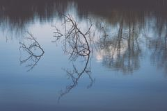 Scenic reflections of trees and clouds in water - retro vintage Stock Image