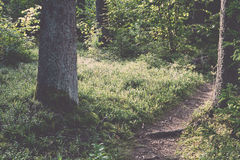 Scenic and beautiful tourism trail in the woods near river . Vin Stock Photos
