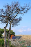 Scenic blue sky landscape of stony sea beach with dry tree at the Black sea coast on sunny day. Seaside scenery with camping tent Stock Photos