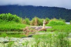 Scenic Bratan Lake in Bali Stock Photo