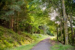 Scenic path through forest in Scotland UK Royalty Free Stock Photo