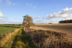 Scenic bridleway in autumn Royalty Free Stock Photos