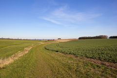 Scenic bridleway and farmland. A scenic grassy bridleway curving through yorkshire wolds farmland towards the vale of york with woodland under a blue sky in Stock Images