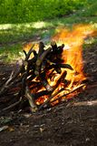 Scenic burning fire Stock Images