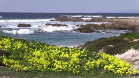 Scenic California Coast with Wildflowers stock video footage
