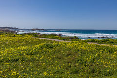 Scenic California Coast and Wildflowers Royalty Free Stock Photos