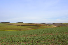 Scenic canola field Stock Image
