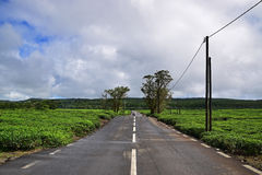 Scenic clean quiet tranquil road in rural or outskirt area with tea plantation on both sides and blue sky stock image