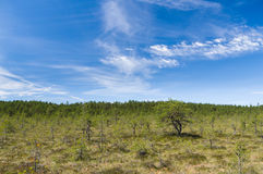 Scenic cloudscape over Viru bog area Royalty Free Stock Photo