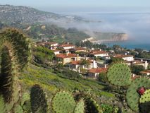 Fog Rolling in over the Palos Verdes Peninsula Coastline, Los Angeles, California. The scenic coast of the peninsula in Los Angeles as viewed through a stand of Stock Photos