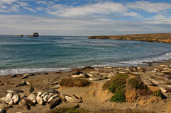 Scenic coastal seascape nature with seals on beach Stock Images