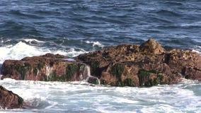 Scenic Coastline stock video