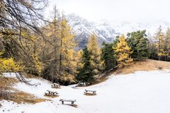 Scenic cold winter landscape with snow and trees and bench Royalty Free Stock Photo
