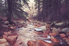 Scenic Colorado Forest River Royalty Free Stock Photo