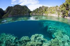Scenic Coral Reef in Raja Ampat, Indonesia Stock Images