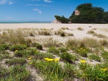 Scenic Coromandel Peninsula NZ coastline seascape Royalty Free Stock Image