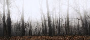 Scenic Country Forest on a Foggy Winter Morning. Begin your journey and travel down this scenic country road on Winter Day surrounded by fog, forest and country stock image