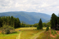 Scenic countryside landscape in the Black Forest: green summer mountain valley with forests, fields and old houses in Stock Photography