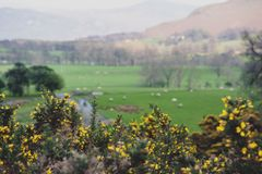 Scenic countryside landscape at a sheep farm in Lake District of Englan stock photo