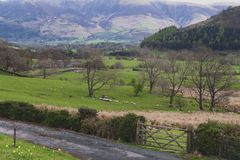 Scenic countryside landscape at a sheep farm in Lake District of Englan royalty free stock photography