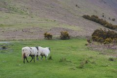 Scenic countryside landscape at a sheep farm in Lake District of Englan stock photography