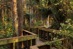 Scenic Cypress Boardwalk Royalty Free Stock Image