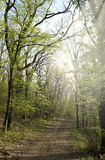 Scenic deciduous forest Royalty Free Stock Image