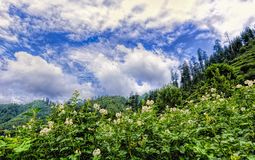 Scenic deep tropical forest jungle at Janjehli, Himalayas, India Royalty Free Stock Photo