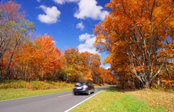Scenic drive in Orange Yellow Maple Tree Fall Foliage Royalty Free Stock Photos