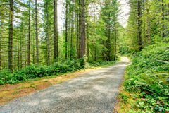 Scenic driveway in green forest. Washington state Stock Photos