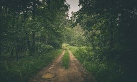 Empty Road Across Green Forest in Europe royalty free stock photos
