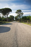 Scenic empty road on atlantic coast with trees in blue sky Royalty Free Stock Photography