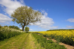 Scenic english bridleway Stock Image