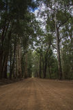 Scenic entrance road to Warren National Park Royalty Free Stock Photo