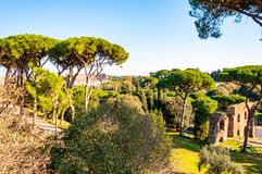 Scenic evergreen park with growing pines, velvet grass lawns and remains, ruins of the Aquaduct, aqueduct of Claudius at the. Palatine hill with Colosseum on stock images