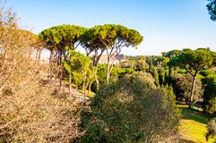 Scenic evergreen park with growing pines, velvet grass lawns and remains, ruins of the Aquaduct, aqueduct of Claudius at the. Palatine hill with Colosseum on stock photography