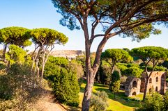 Scenic evergreen park with growing pines, velvet grass lawns and remains, ruins of the Aquaduct, aqueduct of Claudius at the. Palatine hill with Colosseum on stock photo