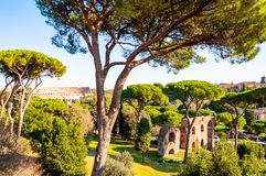 Scenic evergreen park with growing pines, velvet grass lawns and remains, ruins of the Aquaduct, aqueduct of Claudius at the. Palatine hill with Colosseum on royalty free stock image