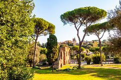 Scenic evergreen park with growing pines, velvet grass lawns and remains, ruins of Aquaduct of Claudius at the Palatine hill in. Scenic evergreen park with royalty free stock image