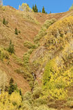 Scenic Fall Mountainside. A scenic fall mountain landscape with golden aspens Royalty Free Stock Images